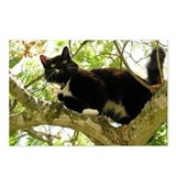 Black cats in trees postcards Postcards