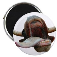 """Cow Tongue 2.25"""" Magnet (100 pack)"""