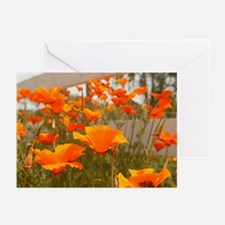The California Poppy Greeting Cards (Pk of 10)