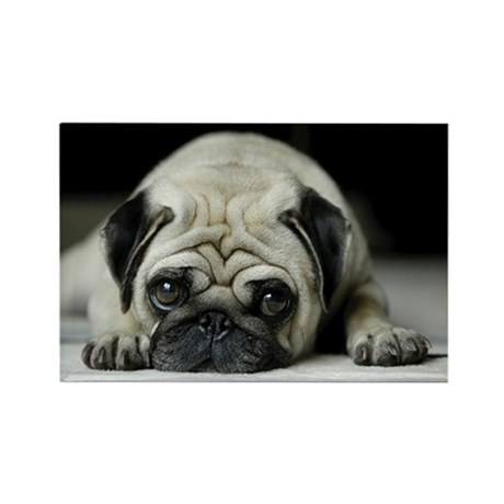 Sad Pug Rectangle Magnet (10 pack)