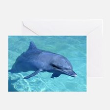 Serenity Dolphin Greeting Cards (Pk of 10)