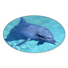 Serenity Dolphin Oval Decal