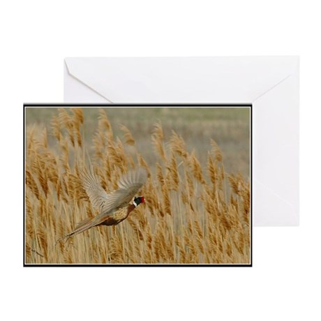 Ringneck Greeting Cards (Pk of 20)