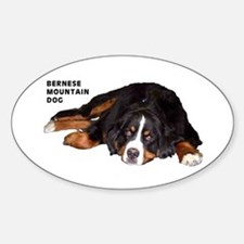 Bernese Mountain Dog - Oval Decal