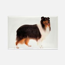 Black Rough Collie Rectangle Magnet (10 pack)