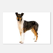 Smooth Collie Dog Lover Postcards (Package of 8)