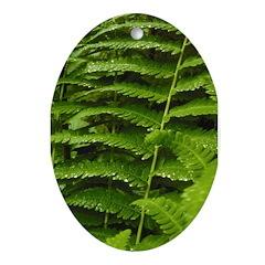 Ferns Oval Ornament