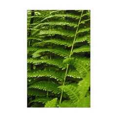 Ferns Posters