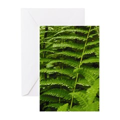 Ferns Greeting Cards (Pk of 10)