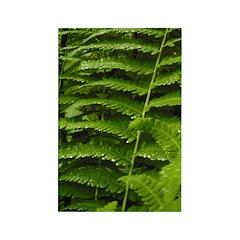 Ferns Rectangle Magnet (10 pack)