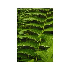 Ferns Rectangle Magnet (10 pack)