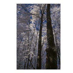 Tall Trees Postcards (Package of 8)