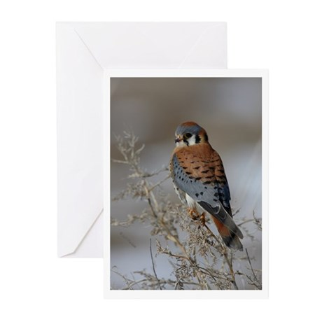 Kestrel Greeting Cards (Pk of 20)