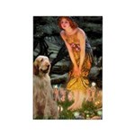 Fairies/ Italian Spinone Rectangle Magnet