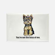 Yorkshire Terrier - Yorkie Bo Rectangle Magnet (10