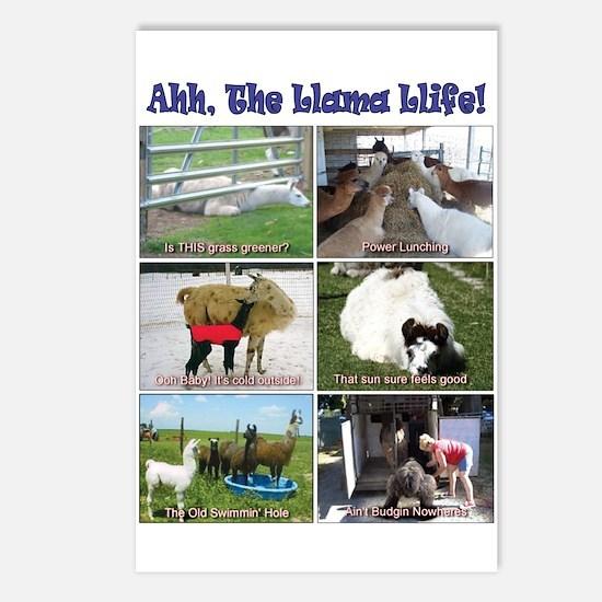 SELR Llama Postcards (Package of 8)