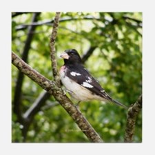 Grosbeak Tile Coaster