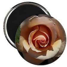 "Peach Rose 2.25"" Magnet (100 pack)"