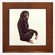 Bonobo Pygmy Chimpanzee Framed Tile
