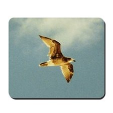 Gull in Flight, Eucla WA Mousepad