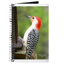 Red Bellied Woodpecker Journal