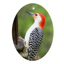 Red Bellied Woodpecker Oval Ornament