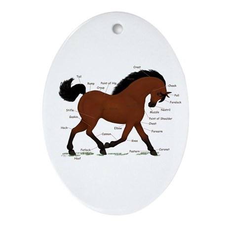 Bay Horse Anatomy Chart Oval Ornament