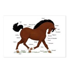 Bay Pony Anatomy Chart Postcards (Package of 8)