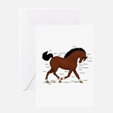 Bay Pony Anatomy Chart Greeting Card