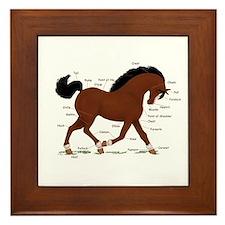 Bay Pony Anatomy Chart Framed Tile