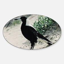 Australian Magpie on Beach Oval Decal
