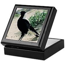 Australian Magpie on Beach Keepsake Box