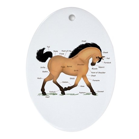 Buckskin Dun Horse Anatomy Chart Oval Ornament