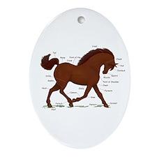 Chestnut Horse Anatomy Chart Oval Ornament