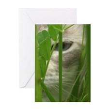 Cat in Grass Greeting Card
