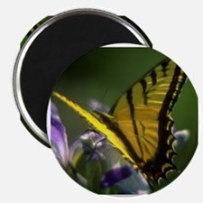 Yellow Swallowtail Butterfly Magnet