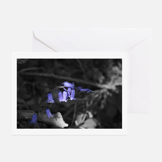 In The Shade Greeting Cards (Pk of 10)