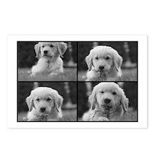 Golden Puppy Yard Work Postcards (Package of 8)
