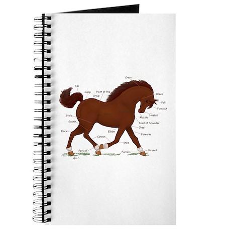 Chestnut Pony Socks Anatomy Chart Journal