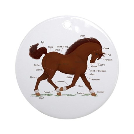 Chestnut Pony Socks Anatomy Chart Ornament (Round)