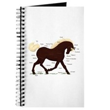 Rocky Mountain Horse Anatomy Journal