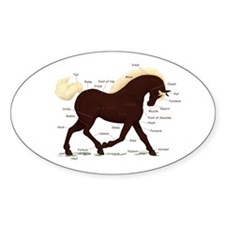 Rocky Mountain Horse Anatomy Oval Decal