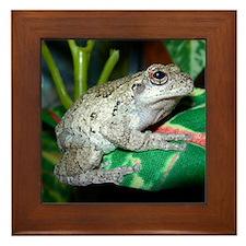 Grey treefrog 2 Framed Tile