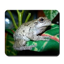 Grey treefrog 2 Mousepad