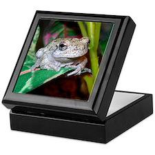 Grey treefrog 1 Keepsake Box