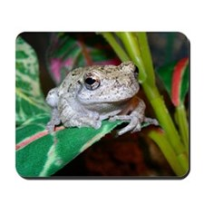 Grey treefrog 1 Mousepad