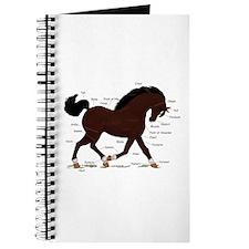 Dark Brown Horse Star Anatomy Chart Journal