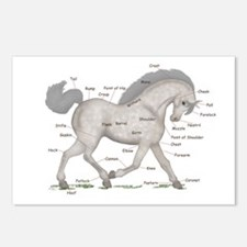 Gray Horse Anatomy Chart Postcards (Package of 8)