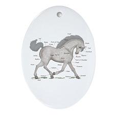 Gray Horse Anatomy Chart Oval Ornament