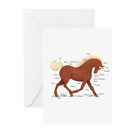 Sorrel Horse Anatomy Chart Greeting Cards (Pk of 1